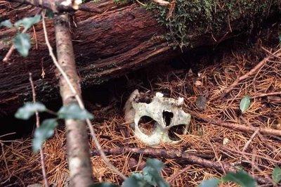 El bosque de los suicidios Bosque-suicida1