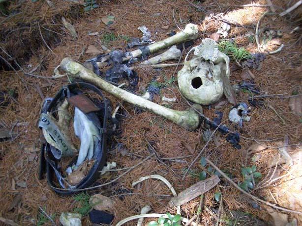 El bosque de los suicidios Bosque-suicida3
