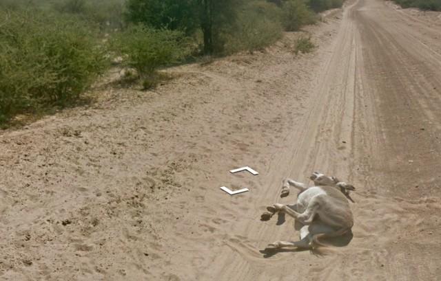 burro supuestamente atropellado por Google