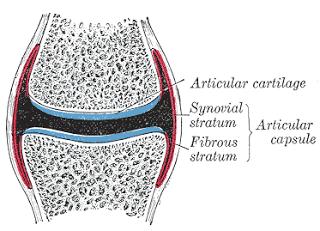 capsula-sinovial